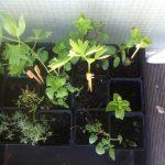 planten delen