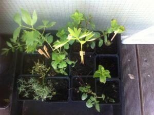 uitdeelplanten