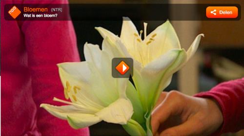 Screen Shot 2015-05-01 at 12.34.39