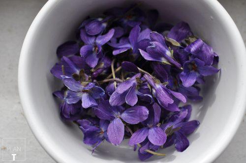 viooltjes2