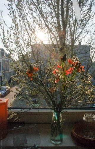 bloemen in de keukenn