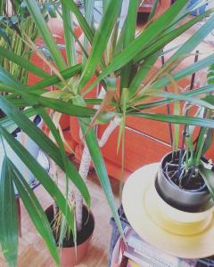 gevonden-plant