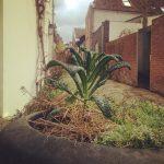 wilde palmkool